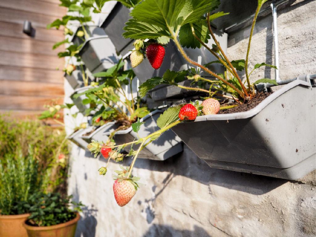 Ako si doma založiť vlastnú záhradu?
